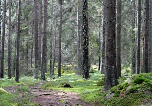 Skog_vid_Nävsjön_i_Södermanland